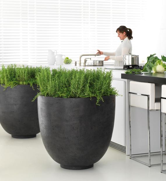 Raumbegrünung mit Büropflanzen